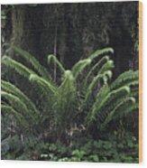 Hoh Rain Forest 3392 Wood Print