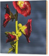 Hollyhock And Storm Clouds Wood Print