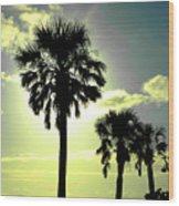 Honeymoon Island Sunset Wood Print