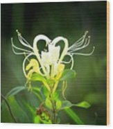 Honeysuckle Love Wood Print