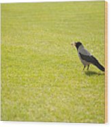 Hooded Crow Bird Gathering Hay Wood Print