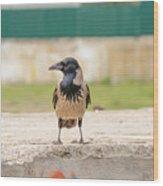 Hooded Crow On A Wall Wood Print