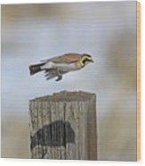 Horned Lark Wood Print