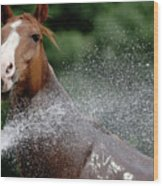 Horse Bath II Wood Print