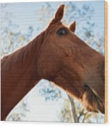 Horse In The Paddock Wood Print