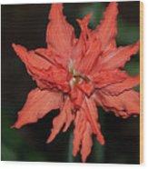 Hostal Candelaria  Wood Print