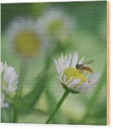Hoverfly Wood Print