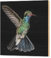 Hovering Hummer Wood Print