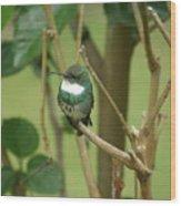 Hummingbird Wood Print