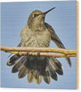 Hummingbird On A Branch Wood Print