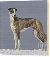 Hungarian Greyhound Wood Print