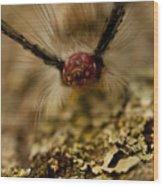 Hungry Caterpillar Wood Print