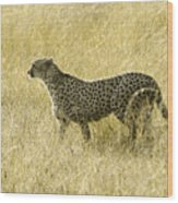 Hunting Cheetah Wood Print