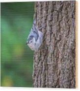 Huthatch Bird  Nut Pecker In The Wild On A Tree Wood Print