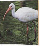 Ibis In The Marsh Wood Print