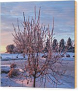 Icy Tree At Sunset  Wood Print
