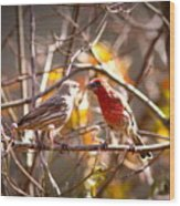 Img_0001 - House Finch Wood Print
