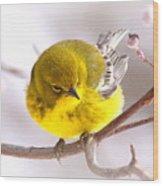 Img_0001 - Pine Warbler Wood Print