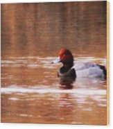 Img_0001 - Redhead Wood Print