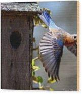 Img_1414-003 - Eastern Bluebird Wood Print
