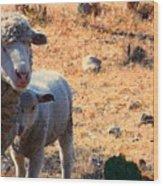 Impoverished Sheep Wood Print