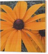 Indian Summer Rudebeckia 2 Wood Print