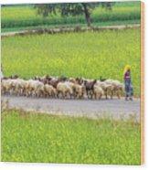 Indian Villagers Herding Sheep. Wood Print