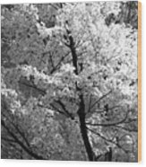 Infrared Tree Pic Wood Print