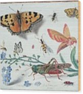 Insects And Garden Pansy Wood Print