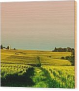Iowa Cornfield Panorama Wood Print