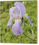 Iris Wood Print