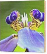 Iris Flower Wood Print by Heiko Koehrer-Wagner