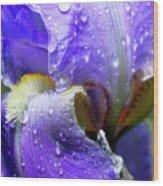 Iris With Raindrops Wood Print