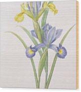 Iris Xiphium Wood Print by Pierre Joseph Redoute