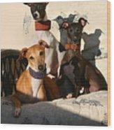 Italian Greyhounds Wood Print
