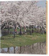 Japanese Cherry Blossom Trees Wood Print