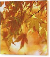 Japanese Maple In Fall Wood Print