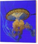 Jellyfish At California Academy Of Sciences In San Francisco, California Wood Print
