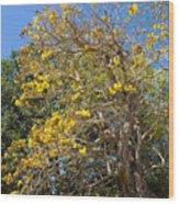 Jerusalem Thorn Tree Wood Print