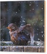 Juvenile Blackbird Wood Print