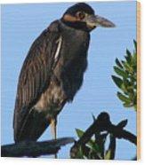Juvenile Night Heron Wood Print