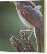 Juvenile Northern Cardinal Wood Print