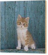 Kitten On A Greek Island Wood Print