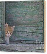 Kitten Peeking Out Wood Print