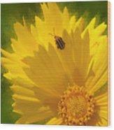 Lady Bug Lookout Wood Print