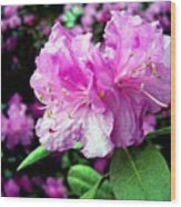 Lady In Pink Wood Print