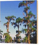 Lake Martin Cypress Swamp Wood Print