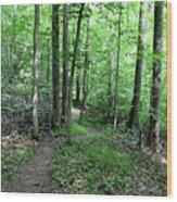Lakeside Trail Winding Path - Yellowwood Lake Wood Print