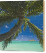 Lanikai Palm Tree Wood Print