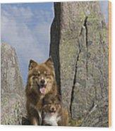 Lapinko�ra Dog And His Pup Wood Print